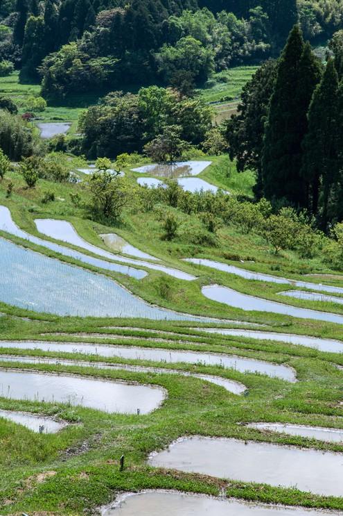 Senmaida rice terraces