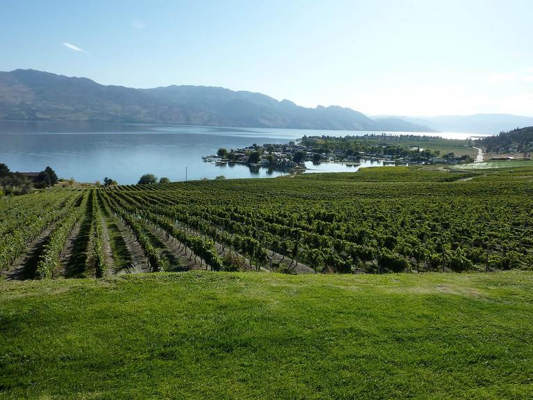 Kelowna Vineyard overlooking Okanagan Lake | © Kelowna09/WikiCommons
