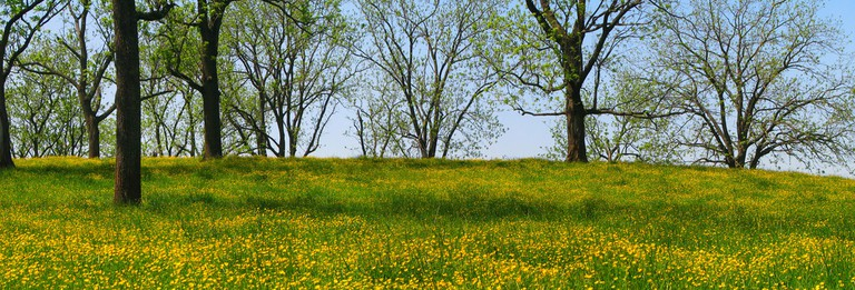 Yellow Fields |©Pirate_J/Flickr