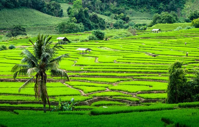 Terrace rice fields in Mae chaem, Chaing Mai, Thailand © NPPK Phalinyot