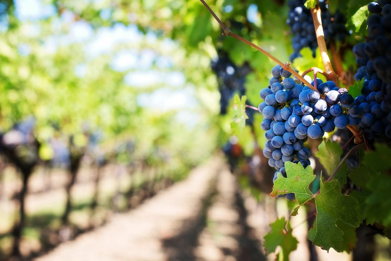 Torgny is a cute little village with its own sunny microclimate enabling it to be one of the best places in the country to cultivate vines ©Pixabay