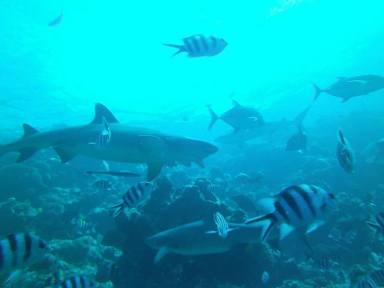 Fiji   Frontieroffical/Flickr