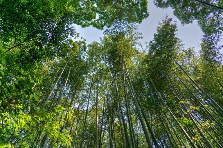 Kyoto Bamboo  © Pixabay