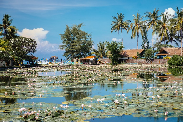 Beautiful Lotus Lagoon pond in Candidasa village, Bali. ©Dmitry Polonskiy / Shutterstock