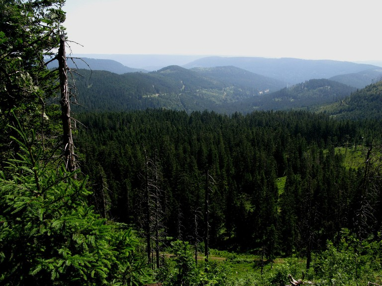 The Black Forest | © Caitriana Nicholson/Flickr