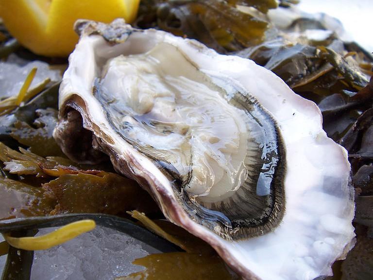 An oyster © Mark Skipper/Flickr