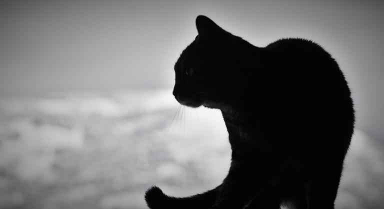 Black Cat | © iggyshoot/Flickr