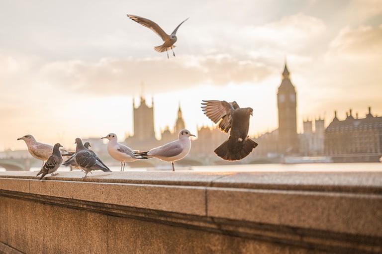 Big Ben providing a backdrop rather than focus | © Unsplash / Pixabay