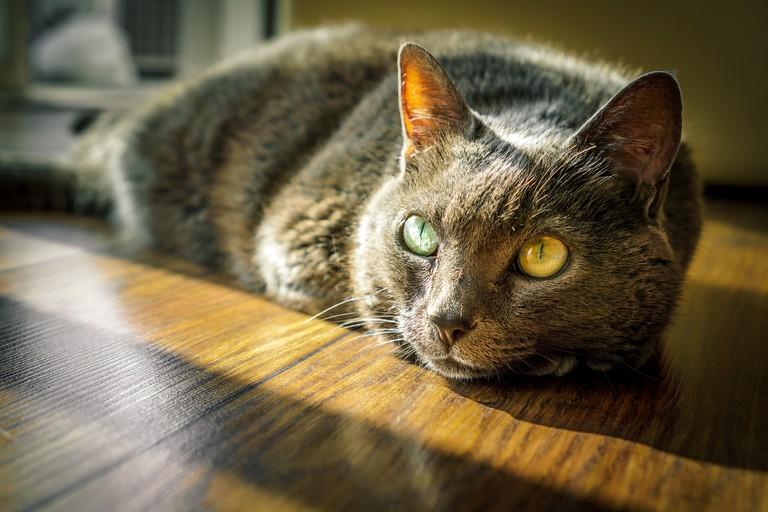A beautiful cat   © tookapic/Pixabay