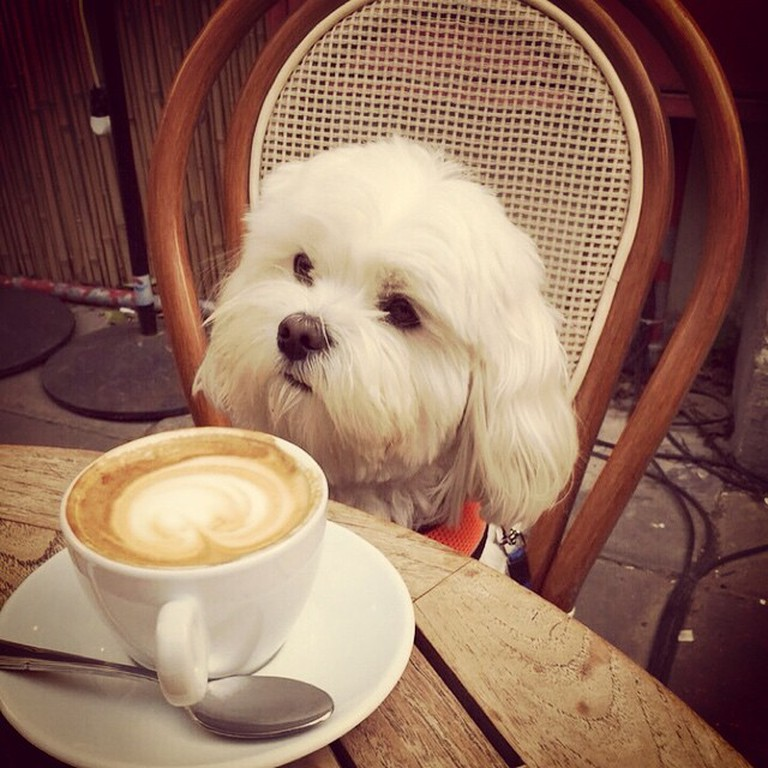 Puppachino | Courtesy of The Culture Trip