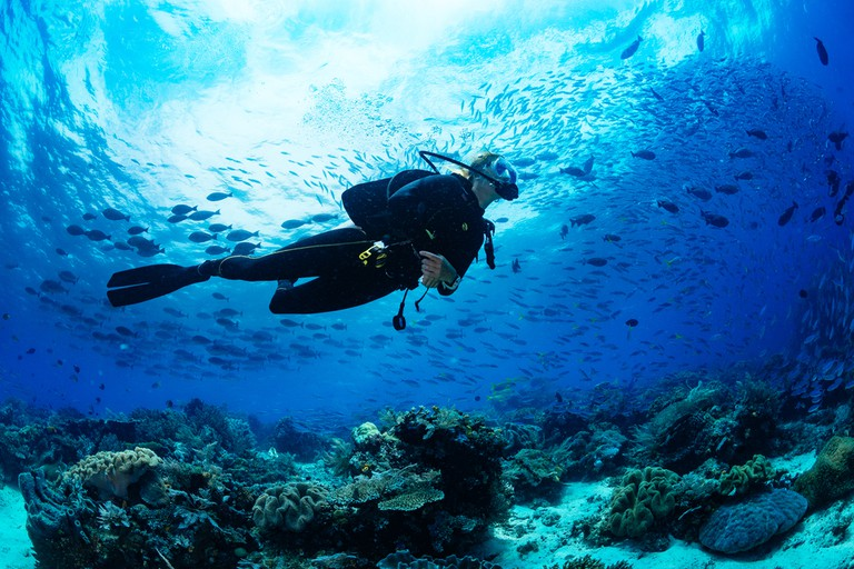 Scuba diver diving on tropical reef