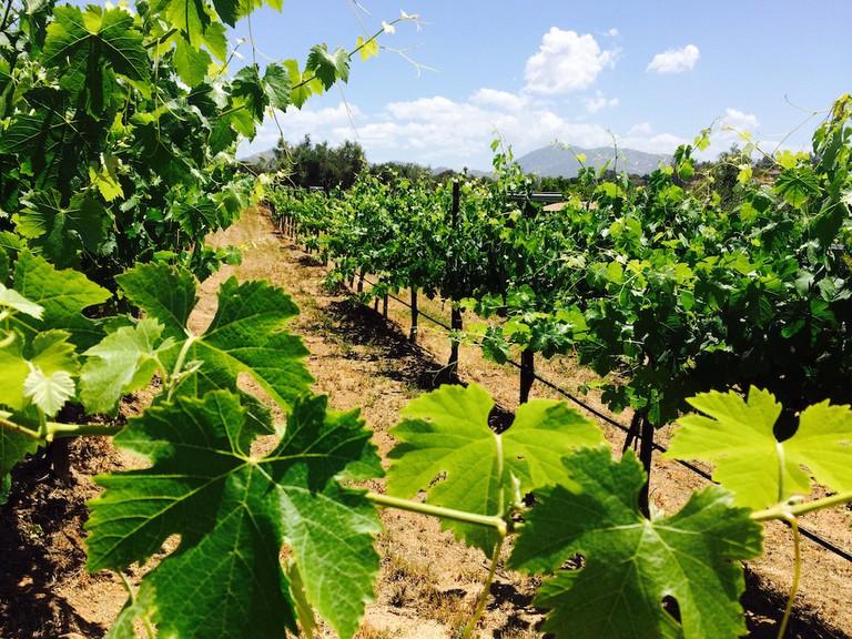 The Bernardo Winery is San Diego's oldest vineyard and winery © The Bernardo Winery