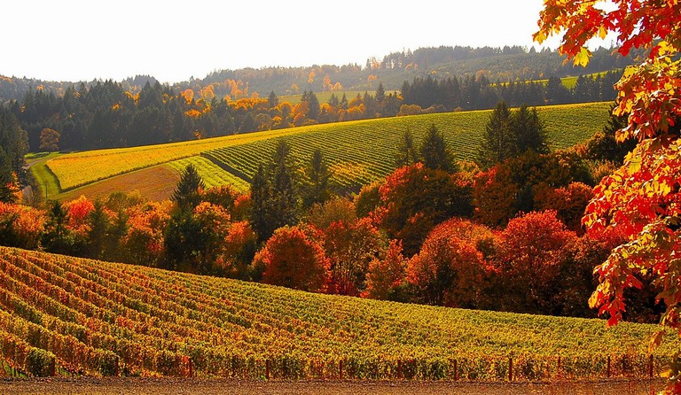 Bella Vida Winery | © John/Flicker