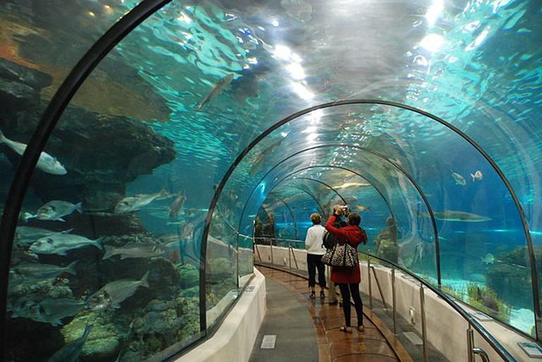 De tunnel van het aquarium te Barcelona, Spanje |© Paul Hermans/ WikiCommons