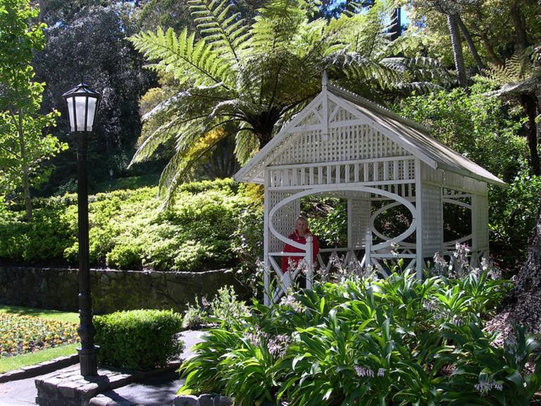 Wellington Botanical Gardens   © Michael Button/flickr
