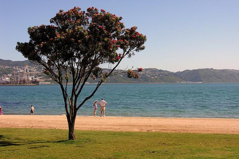 Elements of the New Zealand summer archetype, Oriental Bay   © Phillip Capper/flickr