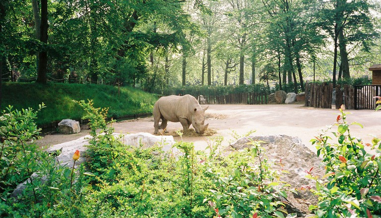 A rhino in Lille's zoo | © Jim Linwood/Flickr