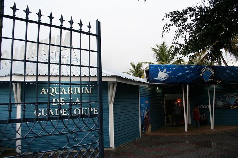 Aquarium de la guadeloupe © Grook Da Oger/WikiCommons