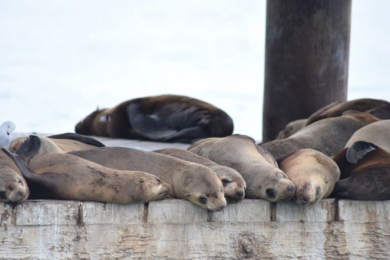 Fur Seals | Courtesy of Jamie Newell