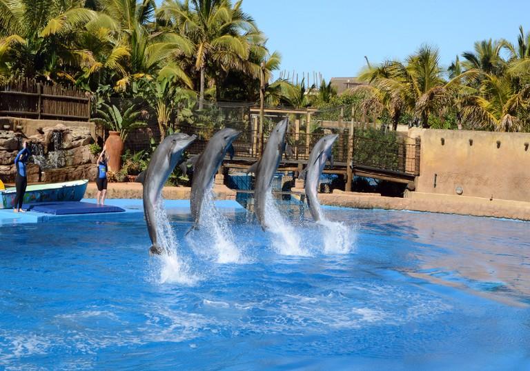 uShaka dolphin show | © Amada44/WikiCommons