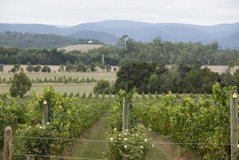Yarra Valley vineyards at Yarra Yering | © tico24/WikiCommons