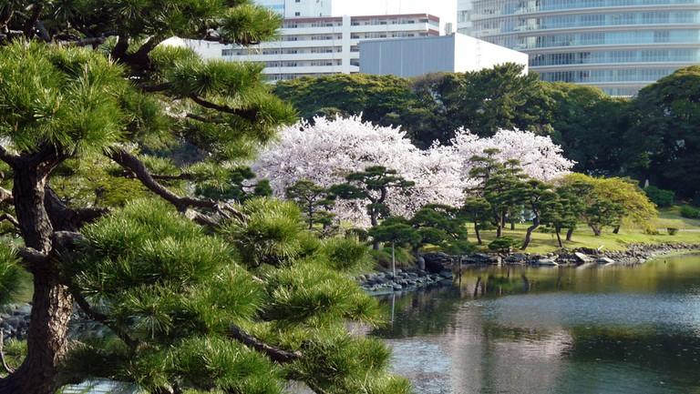 Hama Rikyu, Tokyo © DozoDomo / Flickr