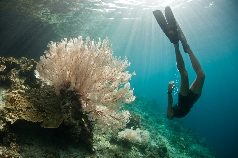 A free diver explores a coral reef slope adorned by a beautiful gorgonian in Raja Ampat, Indonesia
