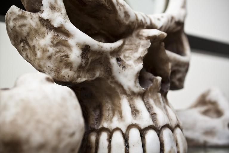 Skull | © jon collier/Flickr