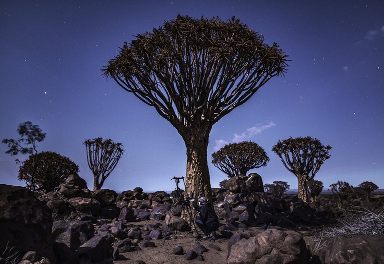 Quiver Tree Forest | Courtesy of Maciej Tomków