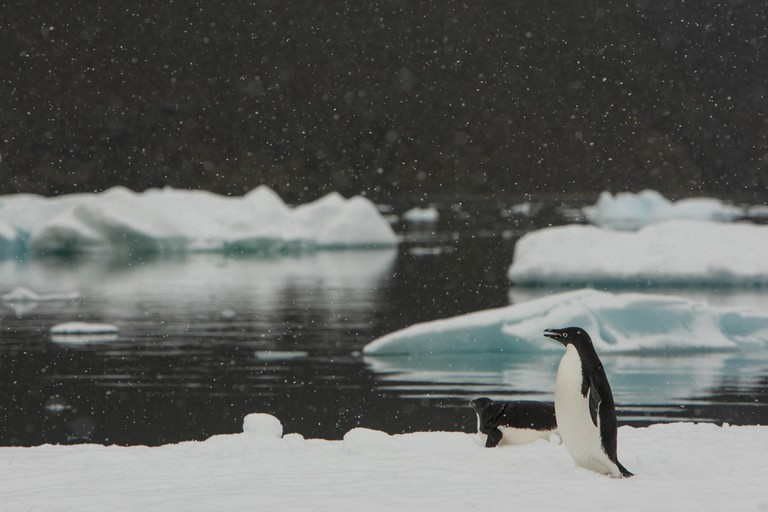 Penguins in the snow | nomis-simon/Flickr