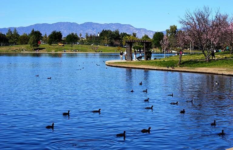 Lake Balboa's Cherry Blossoms © Nandaro/Wikimedia