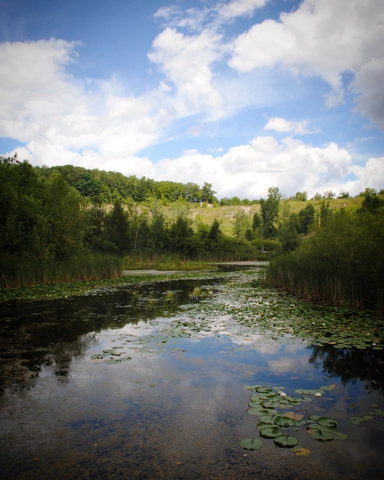 Wetlands in Brick Works | Nicole Egan