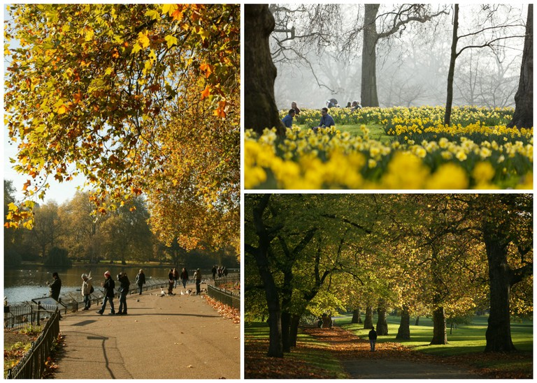 © Edward Parker | © Greywolf, The Royal Parks | © Edward Parker