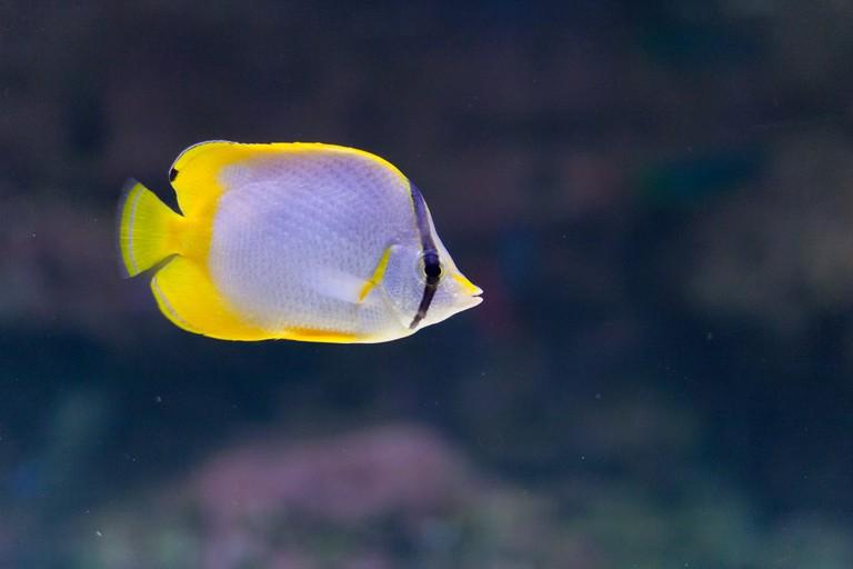 Paris Aquarium | © Qiou87/Flickr