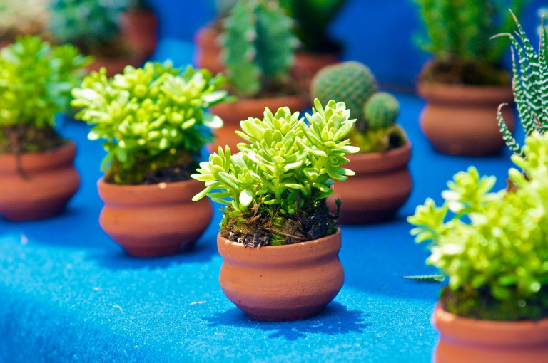 Little Green Plants For Sale | © Ken Kistler / Public Domain Pictures