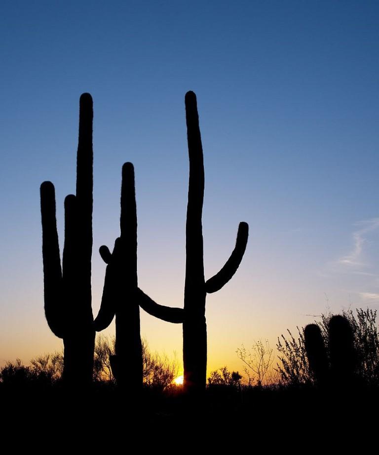 Saguaro Cactus in Tucson | ©skeeze/Pixabay