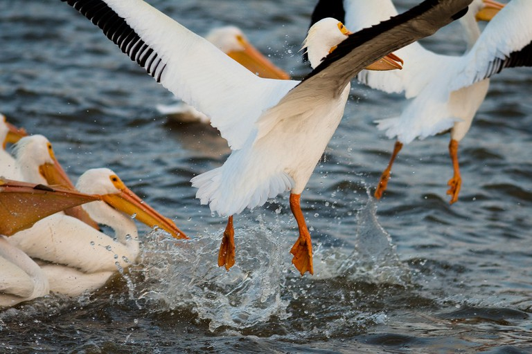 Galveston Bay | © Bobby Ketchum/Flickr