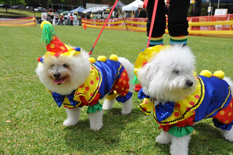 Dogs | © Mosman Council/Flickr