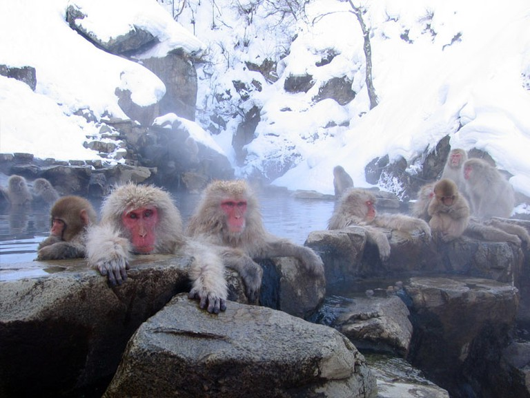 Macaques in a hot spring   © Yosemite/WikiCommons