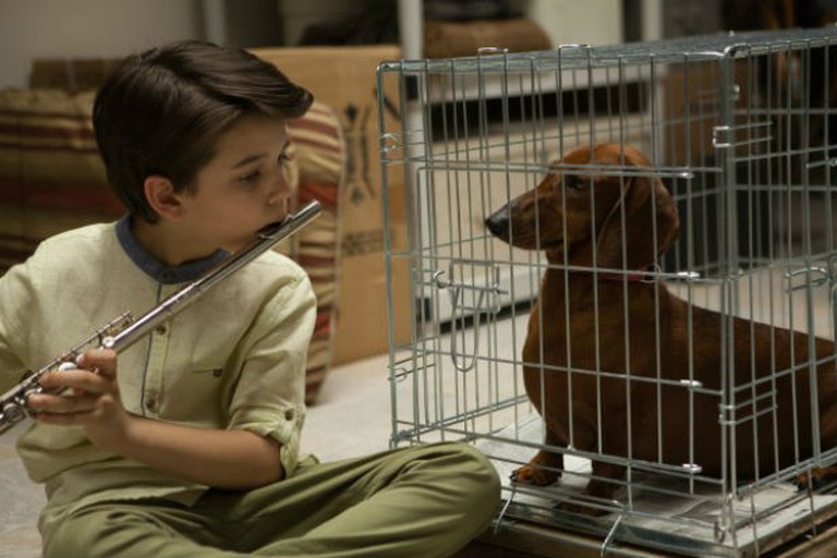 Wiener-Dog | © Anapurna Pictures