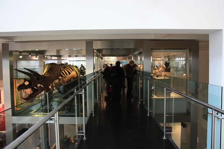 New Triceratops exhibit on re-opening, 22 October 2009 | © Ardfern/WikiCommons