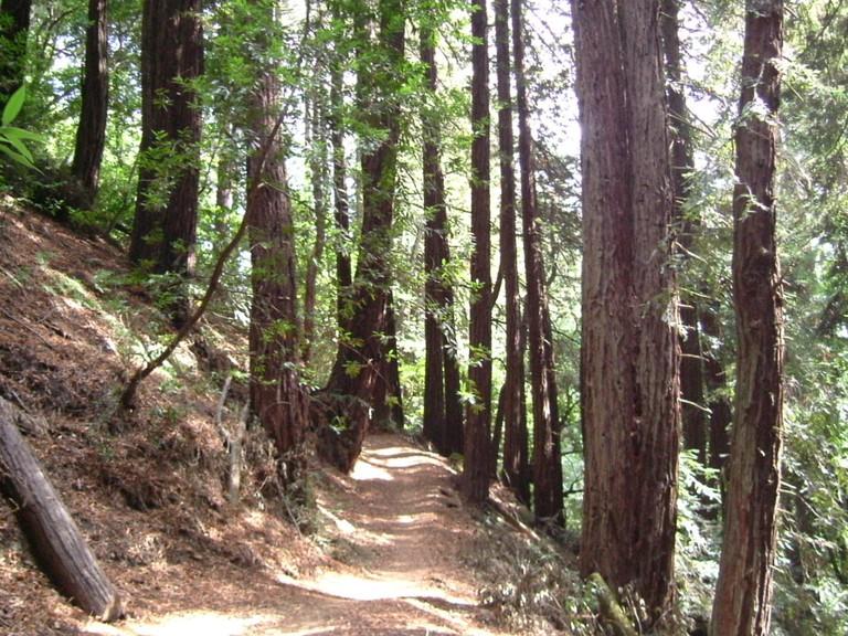 1200px-Redwood_Park's_Golden_Spike_Trail