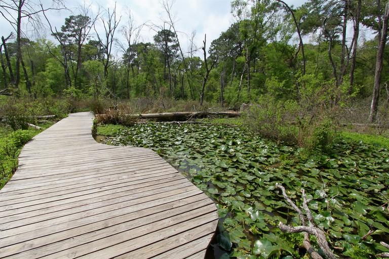 Houston Arboretum | © Roy Luck/Flickr