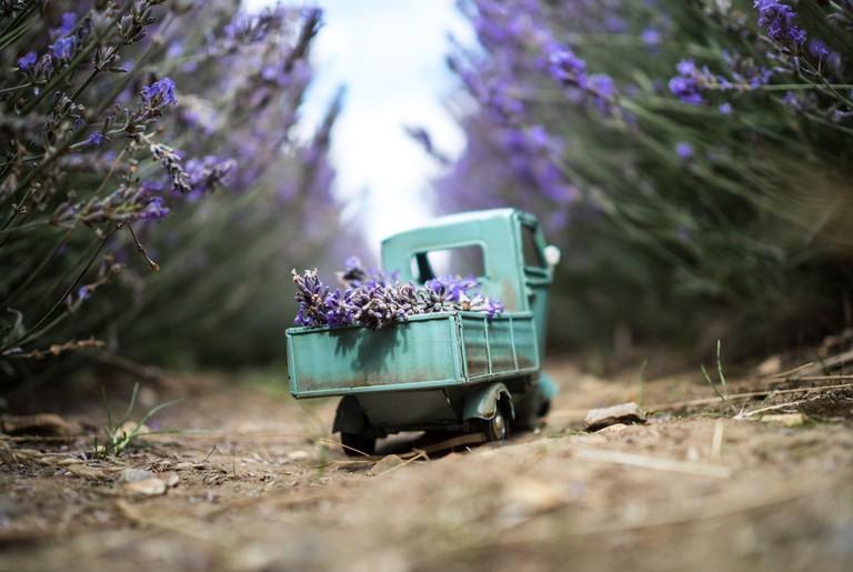 Lavender delivery, Hitchin | © Kim Leuenberger