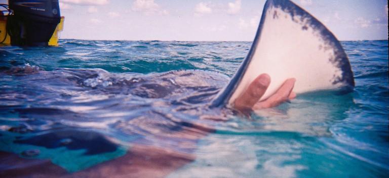 Shark Ray Alley   Courtesy of Michelle Razavi