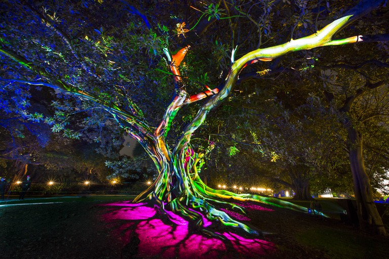 Vivid 2016 at the Royal Botanic Gardens | Courtesy of Vivid Sydney
