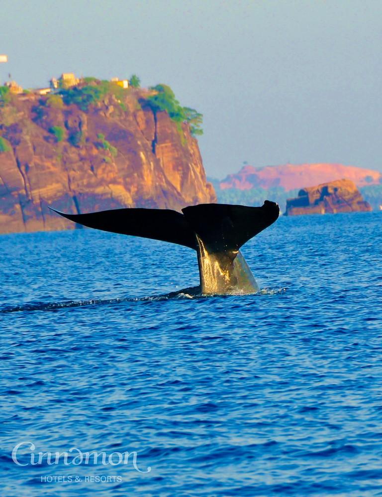 Whale watching at Trinco | © Cinnamon Hotels & Resorts, Sri Lanka
