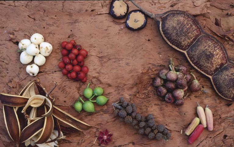 Bush Tucker - Tropical rainforest fruits on paper bark   Courtesy of Tourism Australia © Oliver Strewe