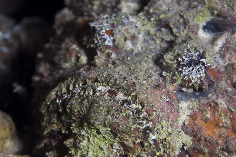 Stonefish | © prilfish / Flickr