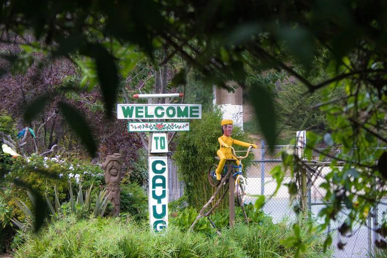 Welcome To Cayuga Foliage